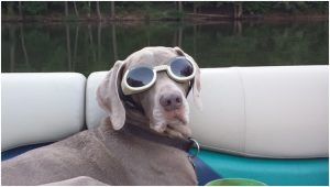 Does your dog wear Doggles?