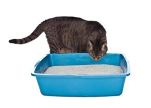 Cat Litter Explained