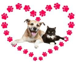 Your Pets and Valentine's Day Danger & Prevention