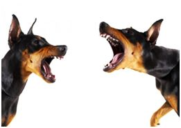 What are the Most Effective Ways to Break Up a Dog Fight?