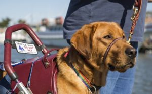 Etiquette and Service Dogs