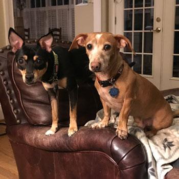 2 dogs in Marietta, GA