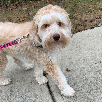 cute dog in Marietta, GA